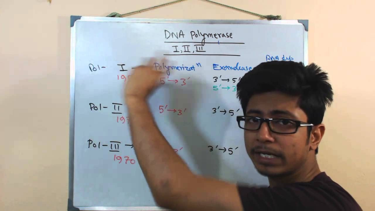 dna polymerase 1 2 and 3 youtube