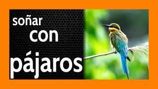 Soñar con Pájaros 🐦🦜🦅 La cuestión es: VOLAR ó No VOLAR 🕊️