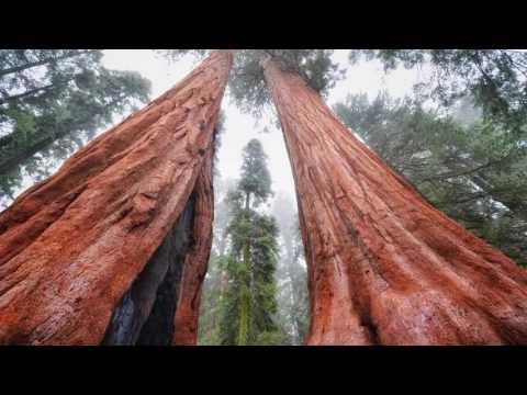 Non ci sono più: Foreste Vere, sulla Terra Piatta; Sveglia!! (Sub-Multilingual)-HD.