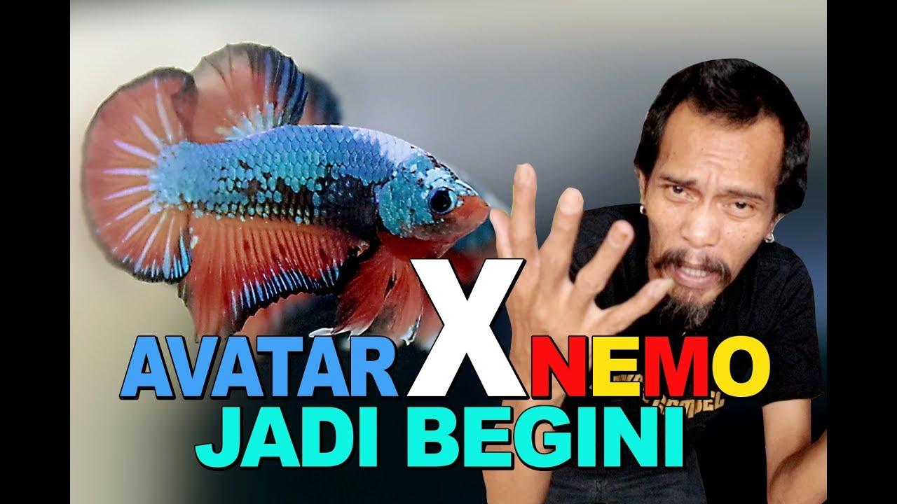 Avatar X Nemo Jadi Begini Youtube