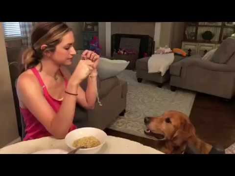 Dog And Owner Eat Spaghetti. Recreating 'Lady and the Tramp'.