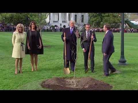 Presidents Trump and Macron plant a tree together on White House South Lawn