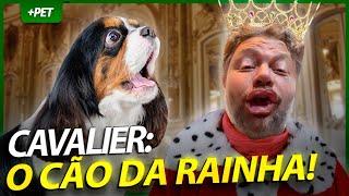 CAVALIER KING, O CACHORRO DA RAINHA!  | EP.1 | CRIAÇÃO E CRIADOR