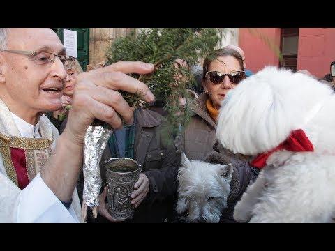 San Antón bendice a los animales en Valladolid