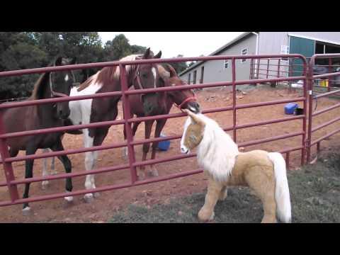 Horses meet animated Horse