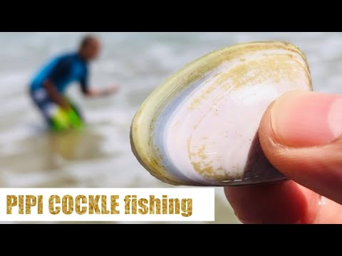 Pipi Cockle (Clam) Fishing || Goolwa, South Australia || Jc & Liza Channel