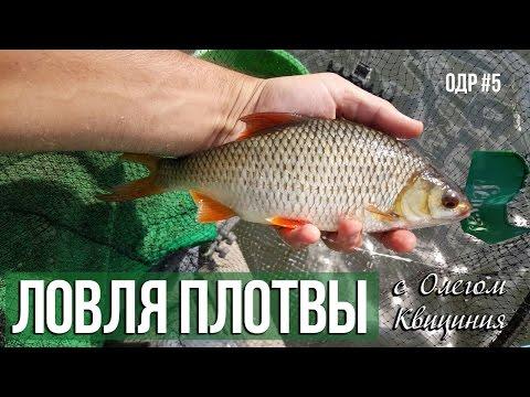 рыбалка на густеру летом