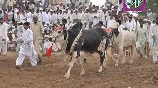 karah mureed chakwal 22/3/2012 (part 1) کراہ مرید چکوال