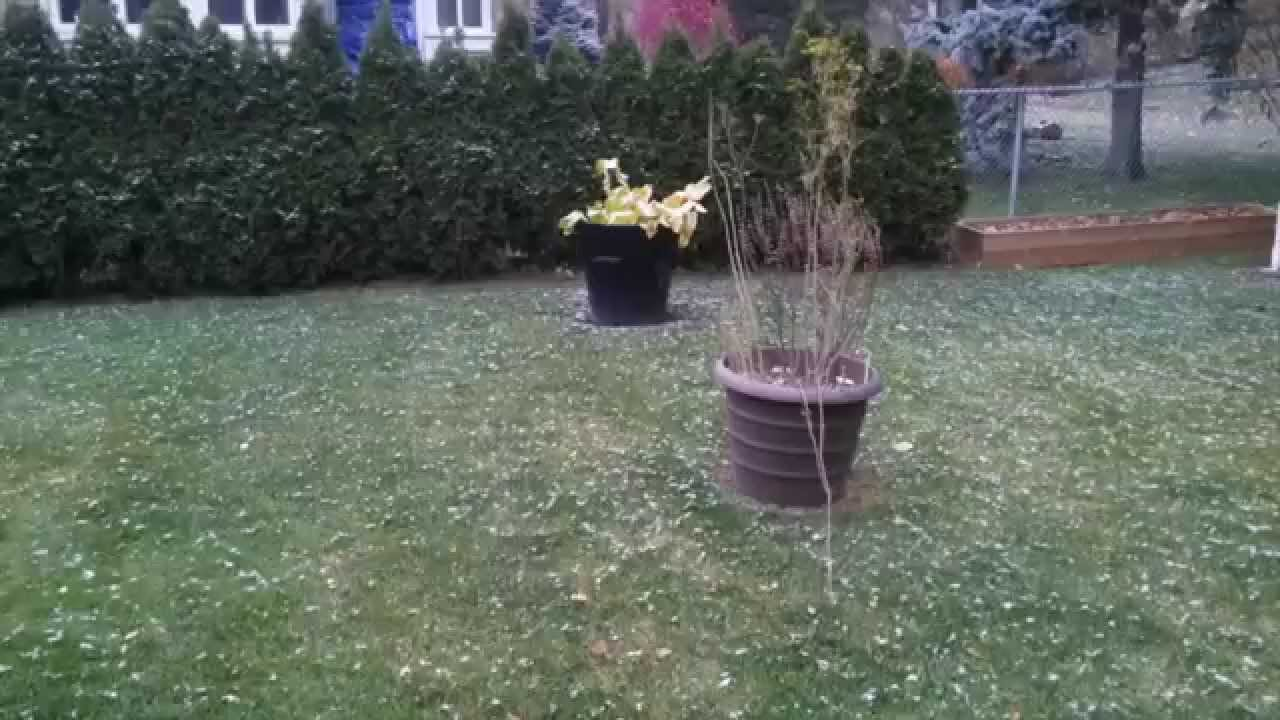 vegetables to plant and harvest in the fall and winter youtube