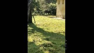 Forrest ka kaattupanni live walk view video
