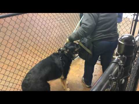 Aggressive Dog Handling Protocols
