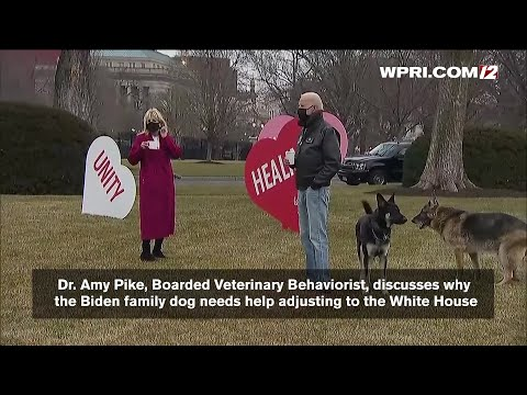 VIDEO NOW: Expert on why Biden family dog needs help adjusti