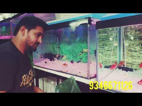NEW SHINE AQUARIUM MALAKPET / OSCAR FISH IN HYDERABAD