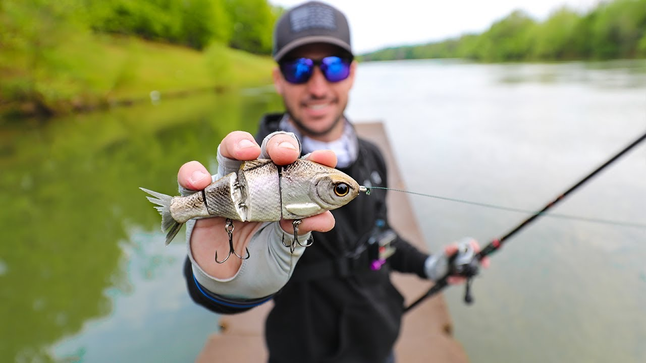 fishing-for-stripped-bass-with-big-swimbaits-ft-yappy