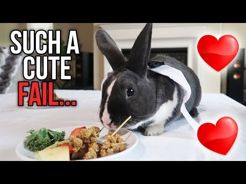 GIVING ALL MY PETS VALENTINE'S DINNER DATES | KristenLeanneVlog