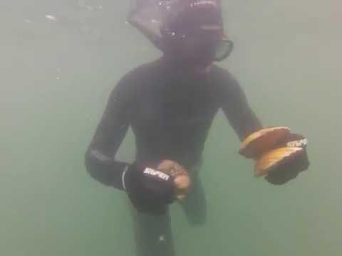 chasse sous marine, coquilles st jacques rade de brest poster