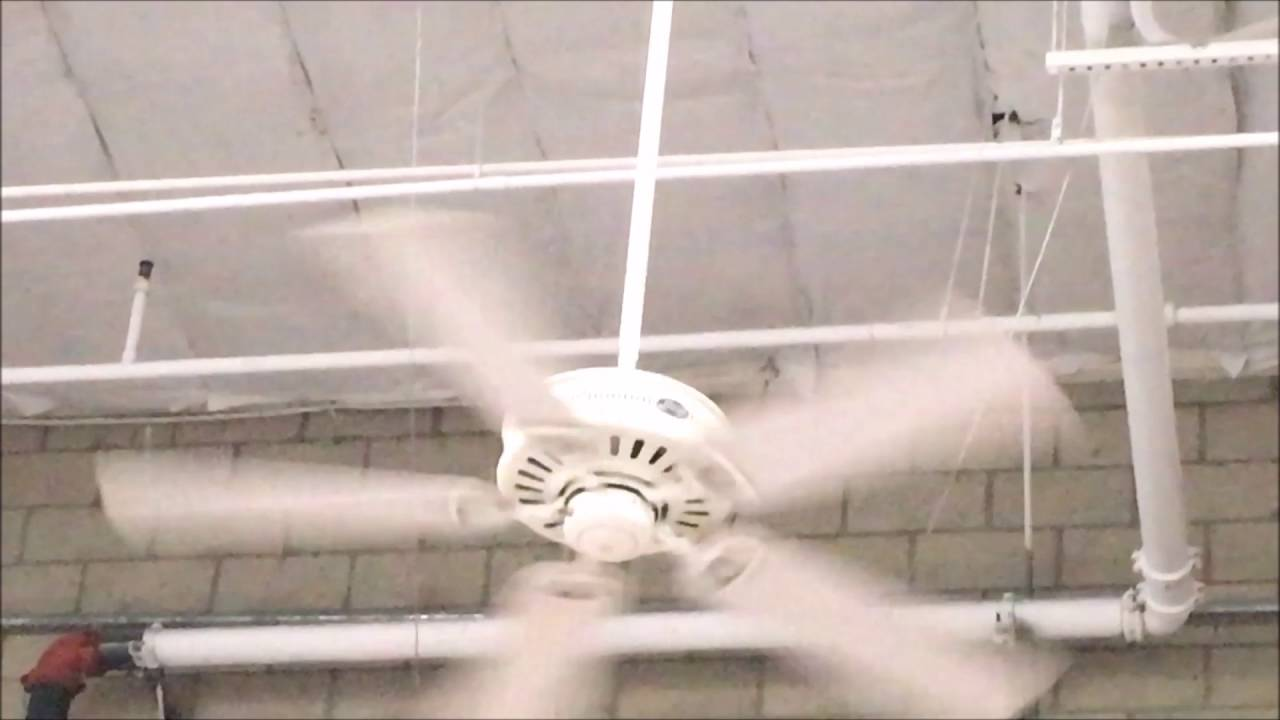 52 hunter passport iii ceiling fans in action costco wholesale in 52 hunter passport iii ceiling fans in action costco wholesale in fresno ca aloadofball Choice Image