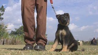 В ЮАР восполняют глобальную нехватку рабочих собак (новости)