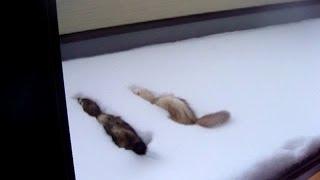 2014年2月8日の大雪で実家のベランダにも雪が積もったらしく 2月9日の朝...