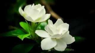 Al-Khaliq | Zain Bhikha ft. Rashid Bhikha
