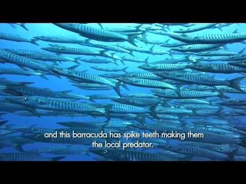 The Diver : เกาะเต่า ห้องเรียนธรรมชาติระดับโลก 1 พ.ย.57 (2/3)