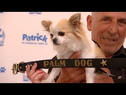 كلب -شيواوا- يفوز بجائزة السعفة الذهبية في مهرجان -كان-  - 14:21-2018 / 5 / 19