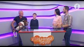 Илья и Александр Турлаковы о породе собак бассет-хаунд / Утренний эфир