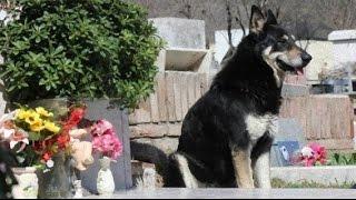 また会えると信じて。6年前に亡くなった主人の墓から離れようとしない犬...