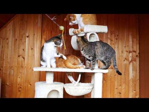 Flying cats 4k UHD