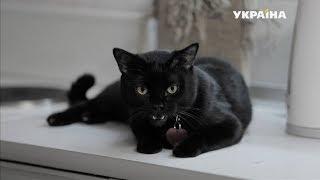 Чёрная кошка | Реальная мистика