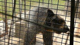 Kupanje medvjeda starog 14 godina