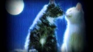 Five Minutes-Aku Dan Kamu~lirik~