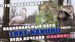 Кения. Lake Nakuru, последствия природного катаклизма. Фламинго исчезли из парка.