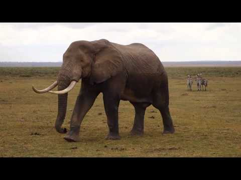 Kenya Safari African wildlife GoPro - Lumix