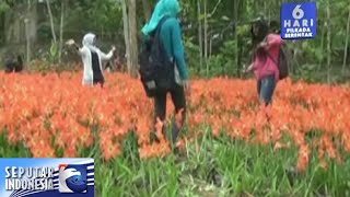 Kebun Bunga Hancur Diinjak Injak [Sindo Malam] [3 Des 2015]