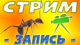 Муравьиный стрим, в гостях Сергей(MuravEd) - Запись от 14.08.2016