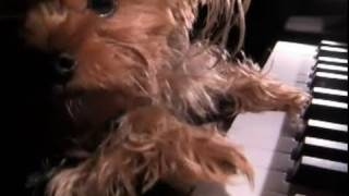 Puppy Love Song: Funny Dog Sings and Plays Piano