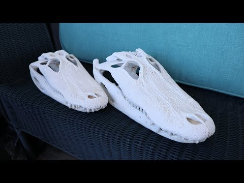 DIY Alligator Skull: How to do a European Mount
