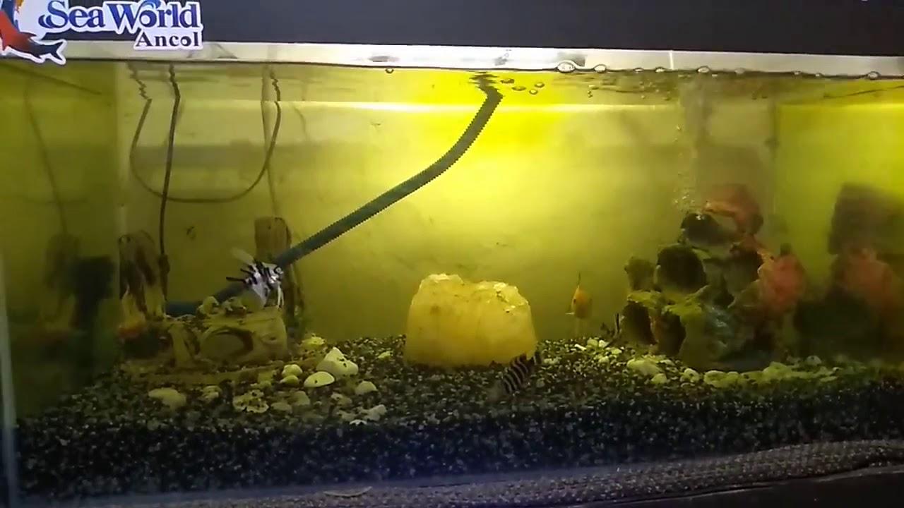 Suara air pancuran aquarium... - YouTube