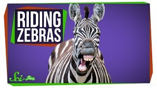 why-do-we-ride-horses-but-not-zebras
