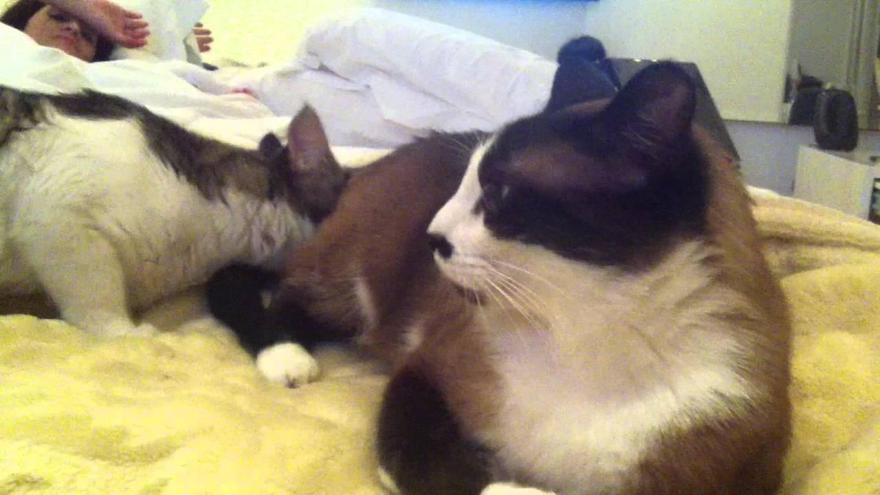 Resultado de imagem para gatos a cheirar o rabo dos outros