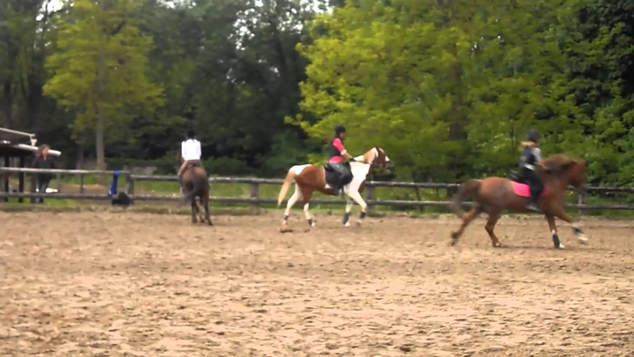 Cours galop 3 4 saut d 39 obstacle chute youtube - Frison saut d obstacle ...