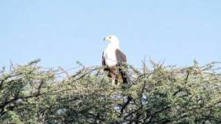 Kenya-LacBaringo.mpg