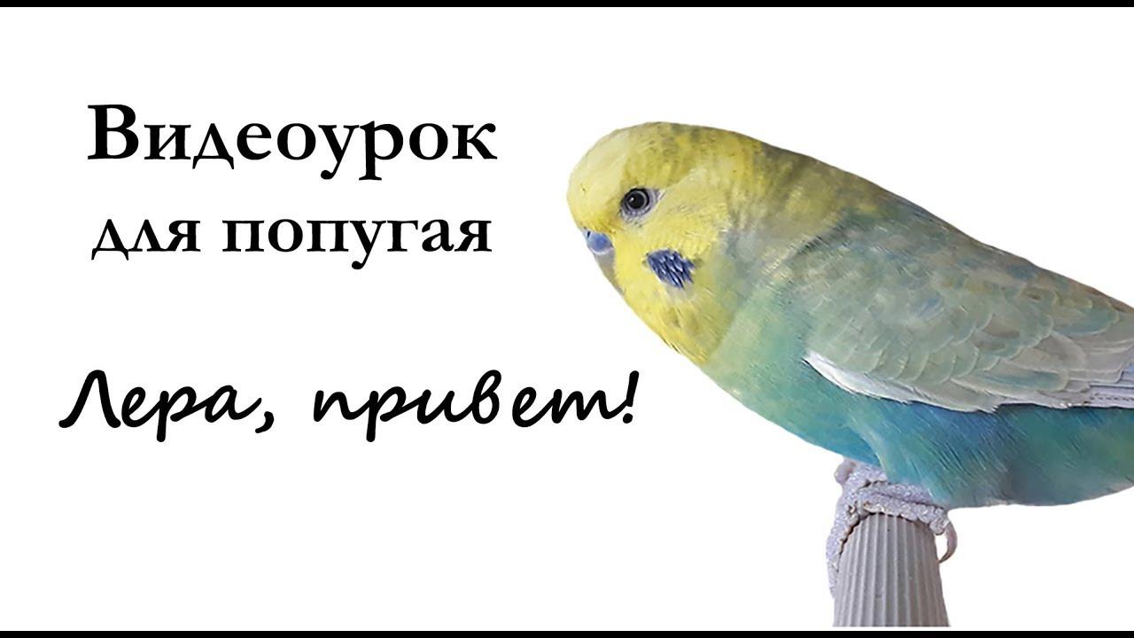 картинки говорит попугай попугаю эстерхази