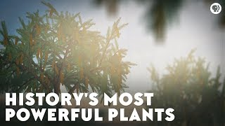 History's Most Powerful Plants