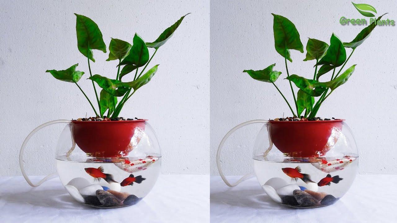 self watering planters