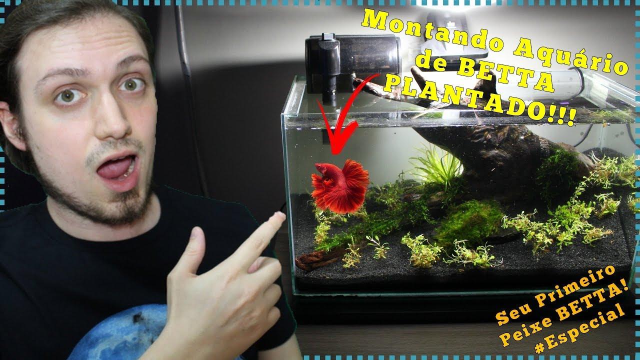 Como montar um aquário de BETTA plantado!