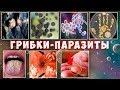 Грибковые поражения. Лечение кандидоза и др. грибковых инфекций. Дрожжи. Плесень.