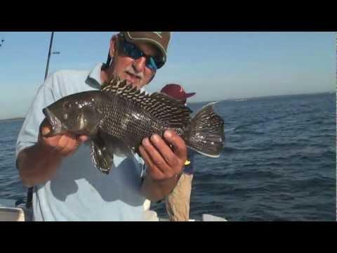 Narragansett Bay Summer Bottom Fishing