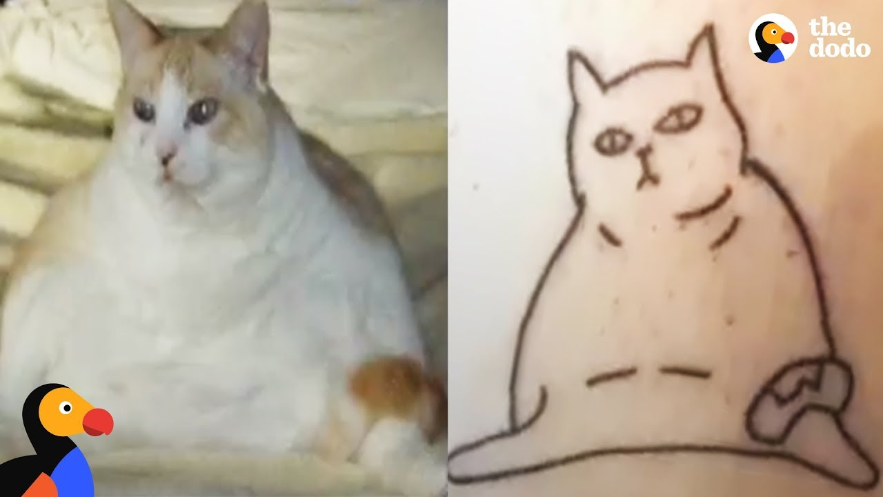 Funny Cat Drawings Inspire Cat Tattoos That Capture The True Essence of Cats | The Dodo